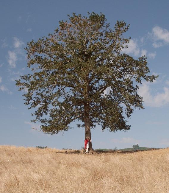 האדם כעץ 1